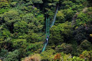 Monteverde foret des nuage