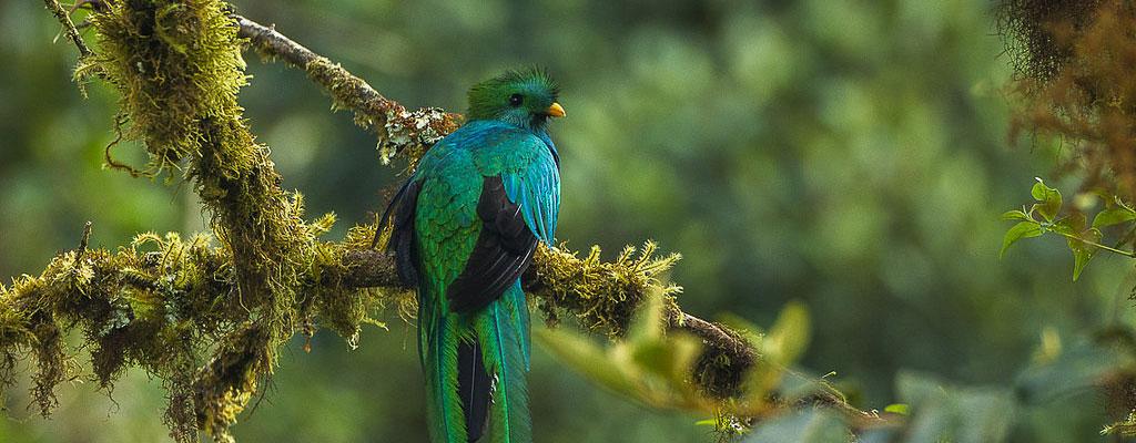Costa Rica faune flore