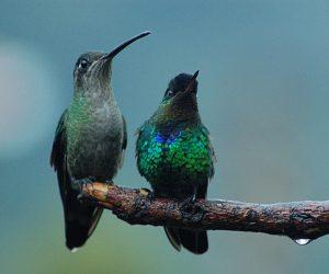 Écotourisme Costa Rica