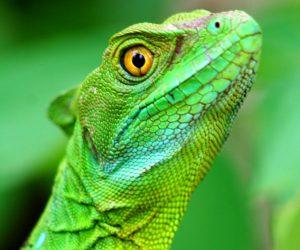 Reptiles Costa Rica