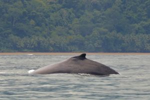 séjour juillet aout Costa Rica