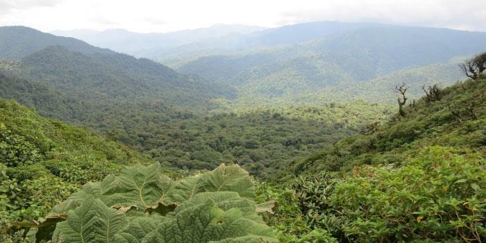 Parc Monteverde