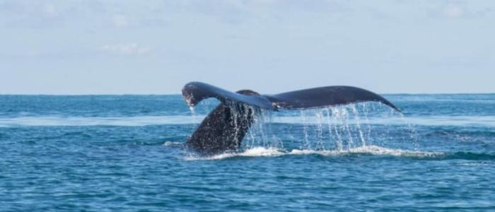 baleines au costa rica - vacances été
