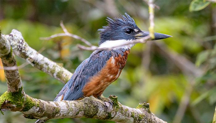 birdwachting