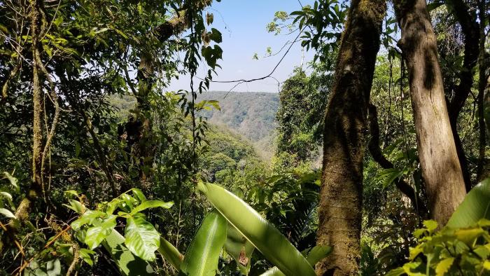 monteverde randonnée