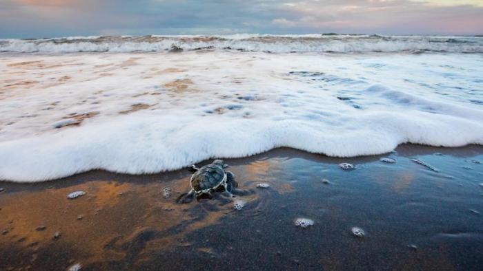 tortues mer