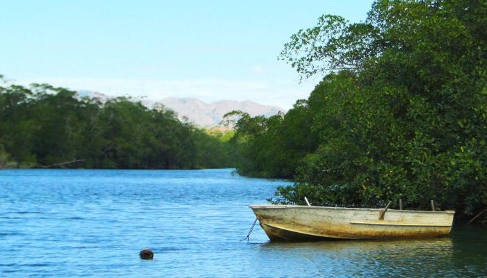 mangroves tamarindo